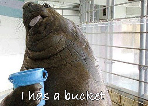 Lolrus Bucket