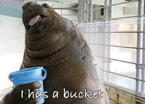 Lolrus Bucket